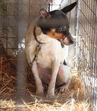 Hund auf mallorkinischem Markt