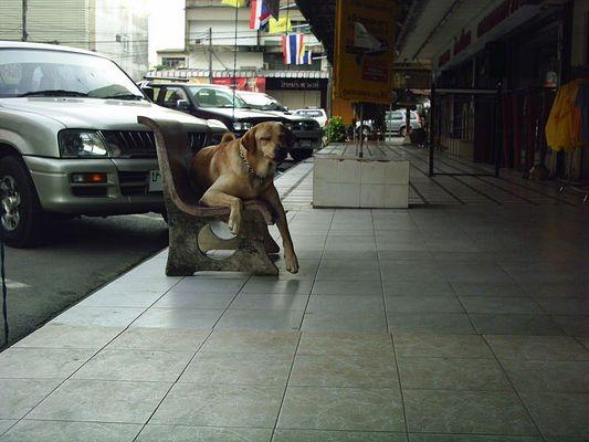 Hund auf Stuhl