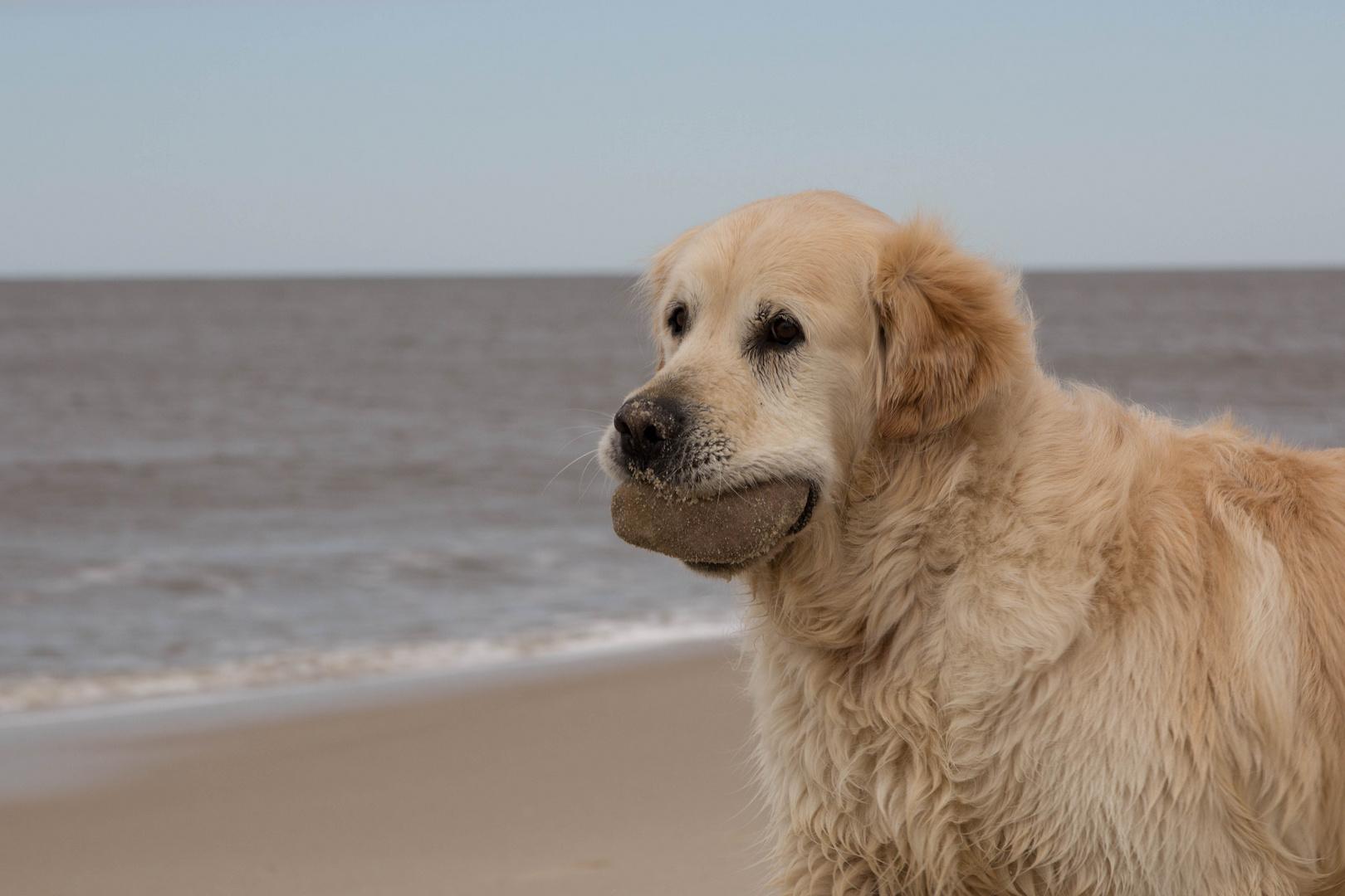 Hund auf Sylt