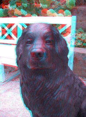 Hund aus Bayreuth