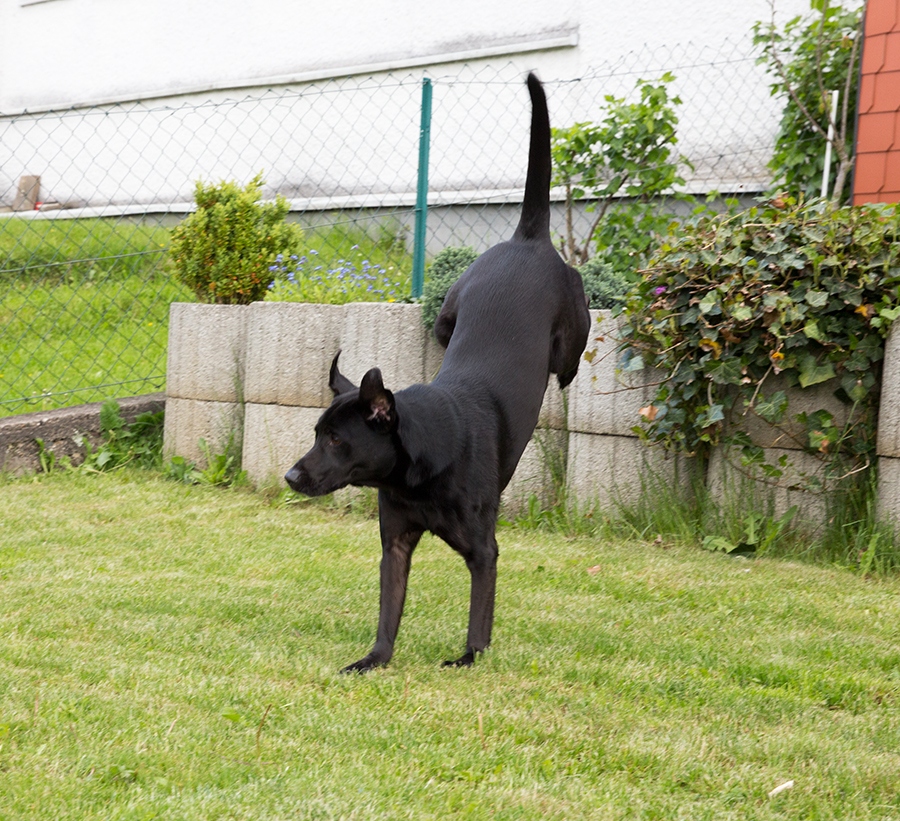 Hund beim Spiel