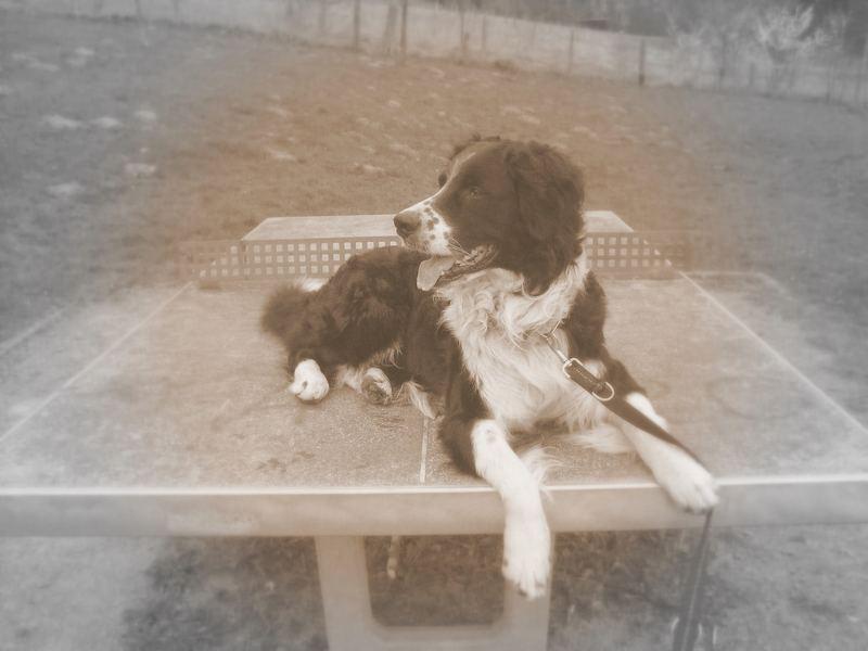 Hund beim Tischtennis...