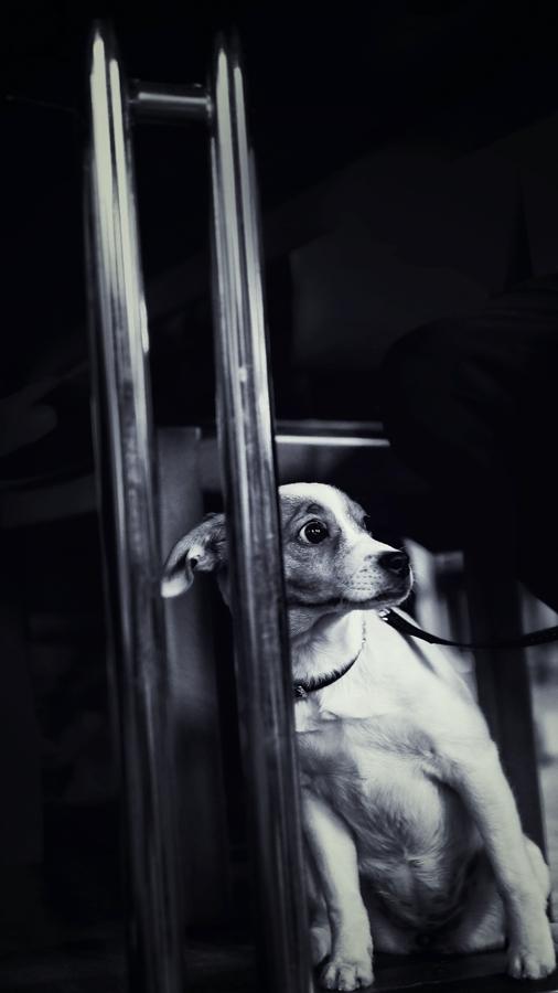 ... Hund