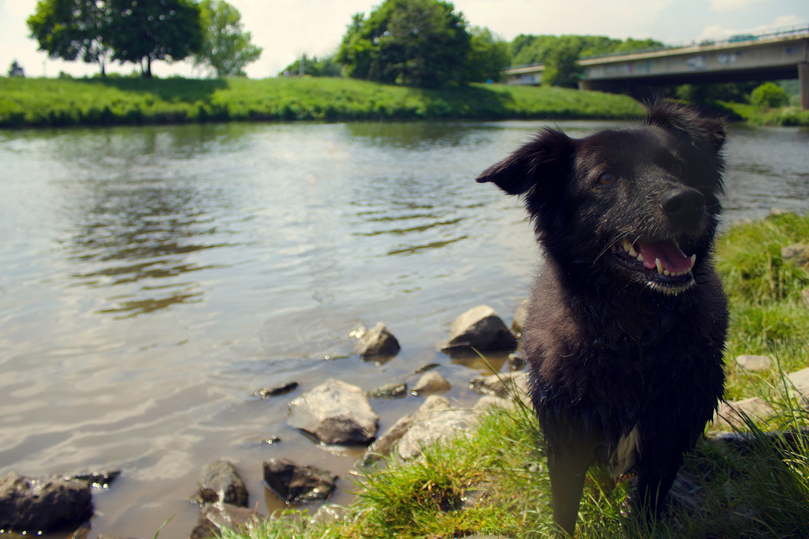 Hund | Collie | Shooting | Portait