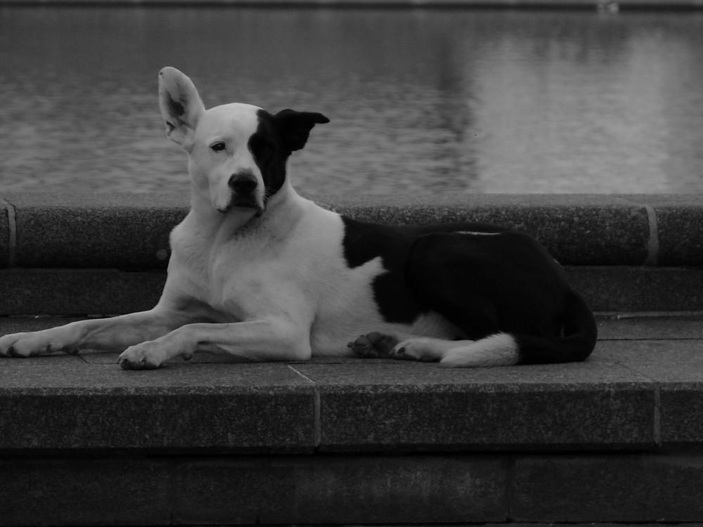 Hund einsam in der Großstadt
