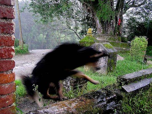 hund flüchtet vor regenguß