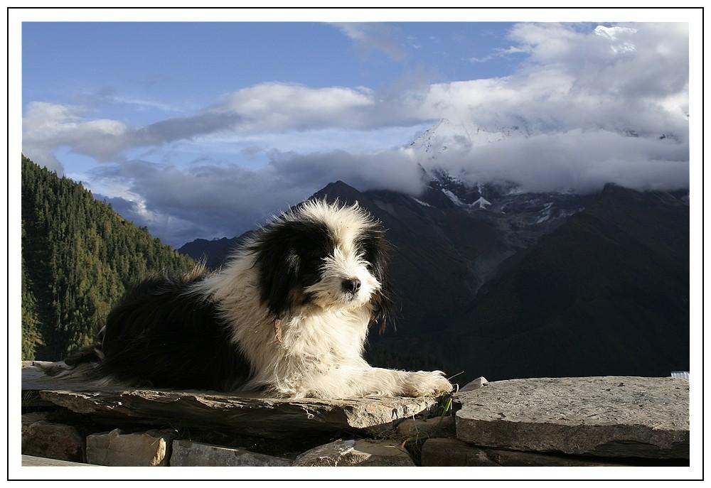Hund genießt die Bergluft