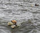 Hund im aufgewühlten Steinhuder Meer