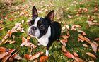 Hund im Herbstlaub