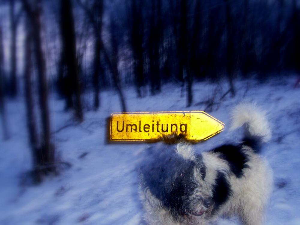 Hund im Schilderwald