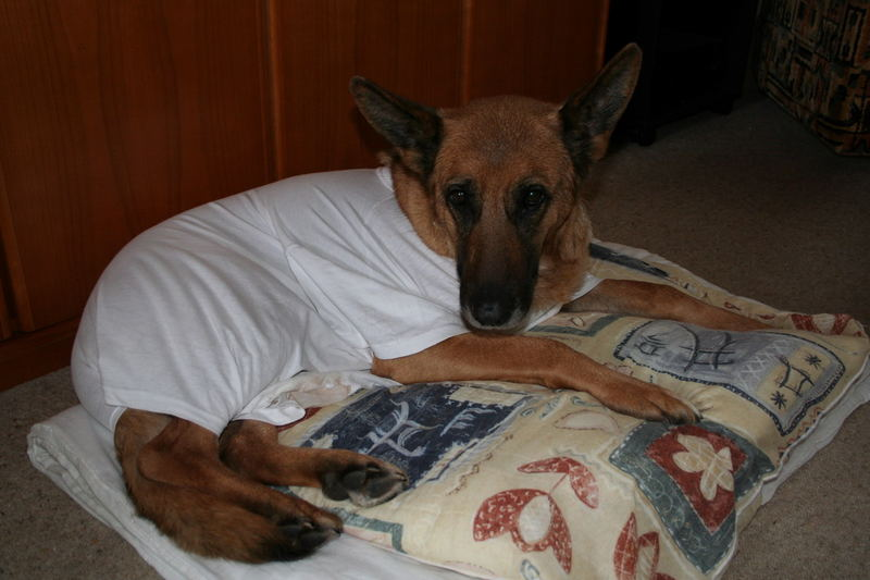 Hund im Schlafrock