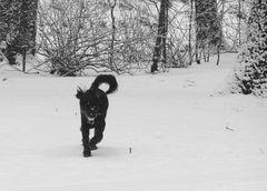 Hund im Schnee…