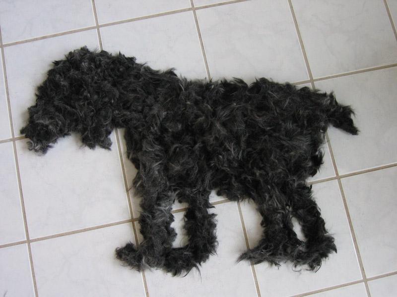 Hund in 2D
