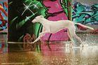 Hund in Bunt :-))