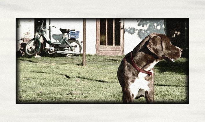 hund in dänemark