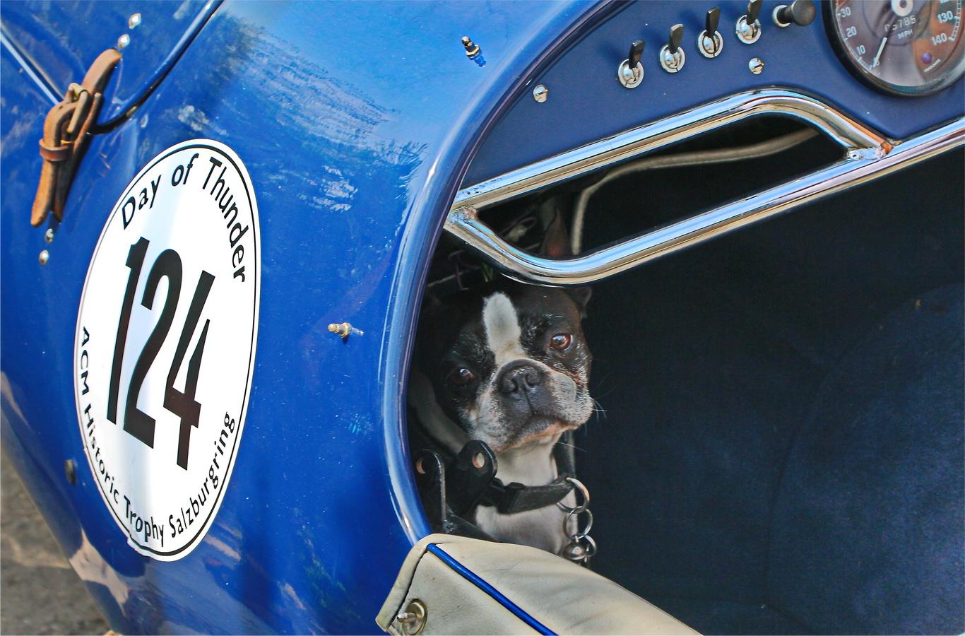 Hund in der motorisierten Raubkatze