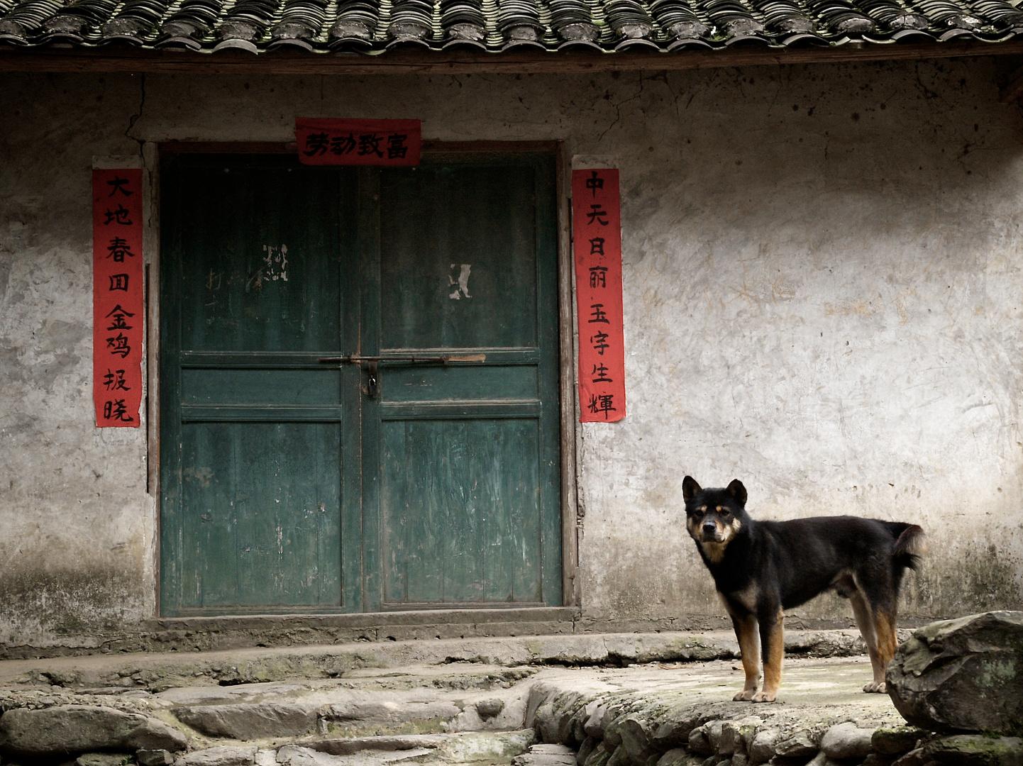 Hund in einem chinesischen Dorf