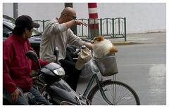 Hund in Shanghai ...