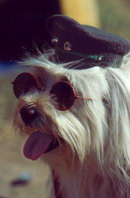 Hund in Uniform