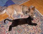 Hund + Katz´ - verschiedene Sichtweisen