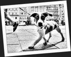 Hund ( leicht schraeg )