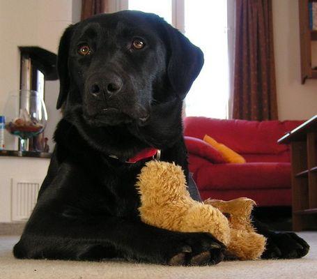Hund mit Bärchen