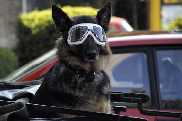 Hund mit Durchblick