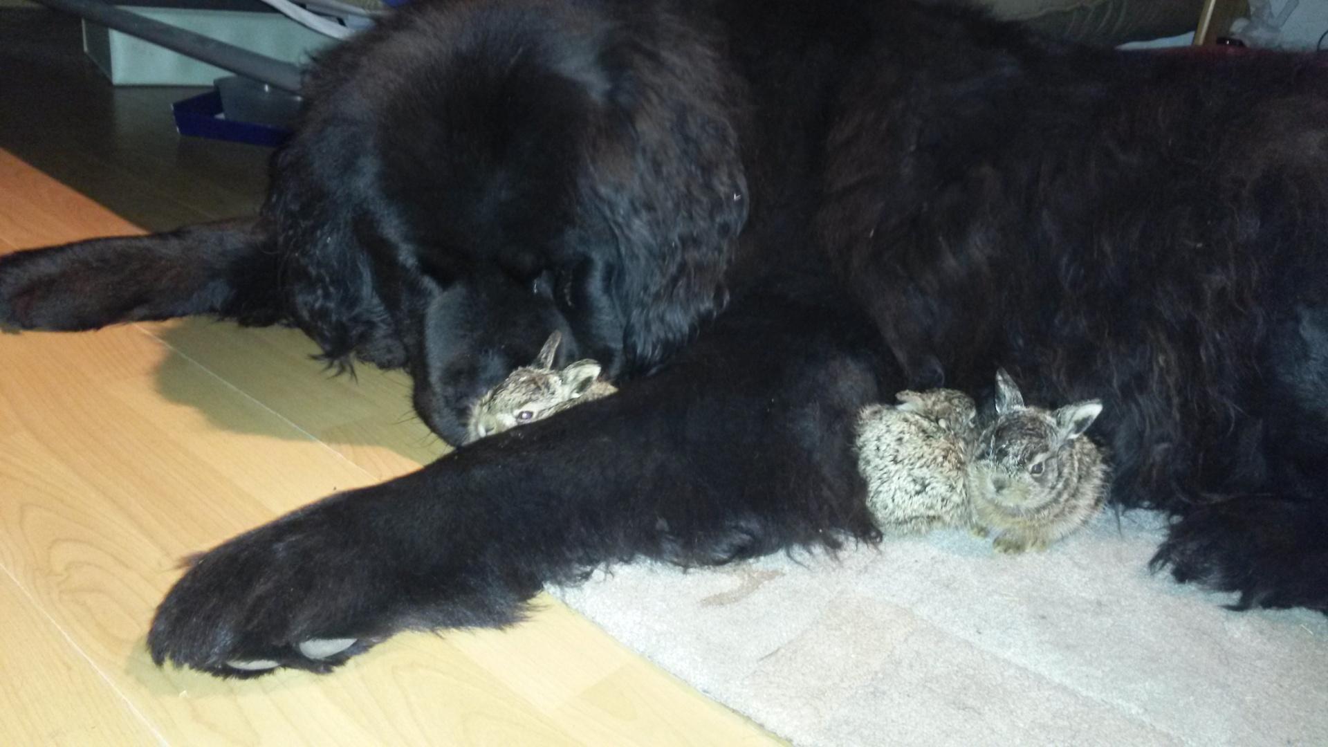 Hund mit Hasen