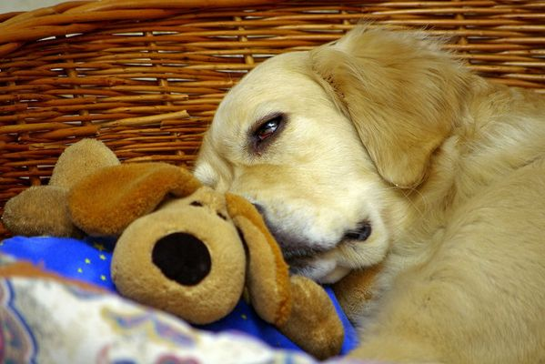 Hund mit Hund