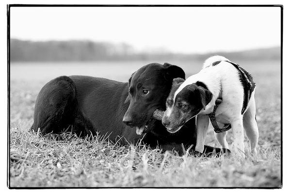 Hund mit Hund mit Stock.