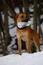 Hund mit riesen Eiszapfen