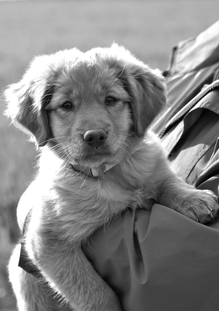 Hund, noch ohne Name...