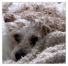 Hund oder Decke??