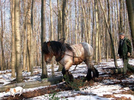 Hund, Pferd und Mensch arbeiten gemeinsam im Wald