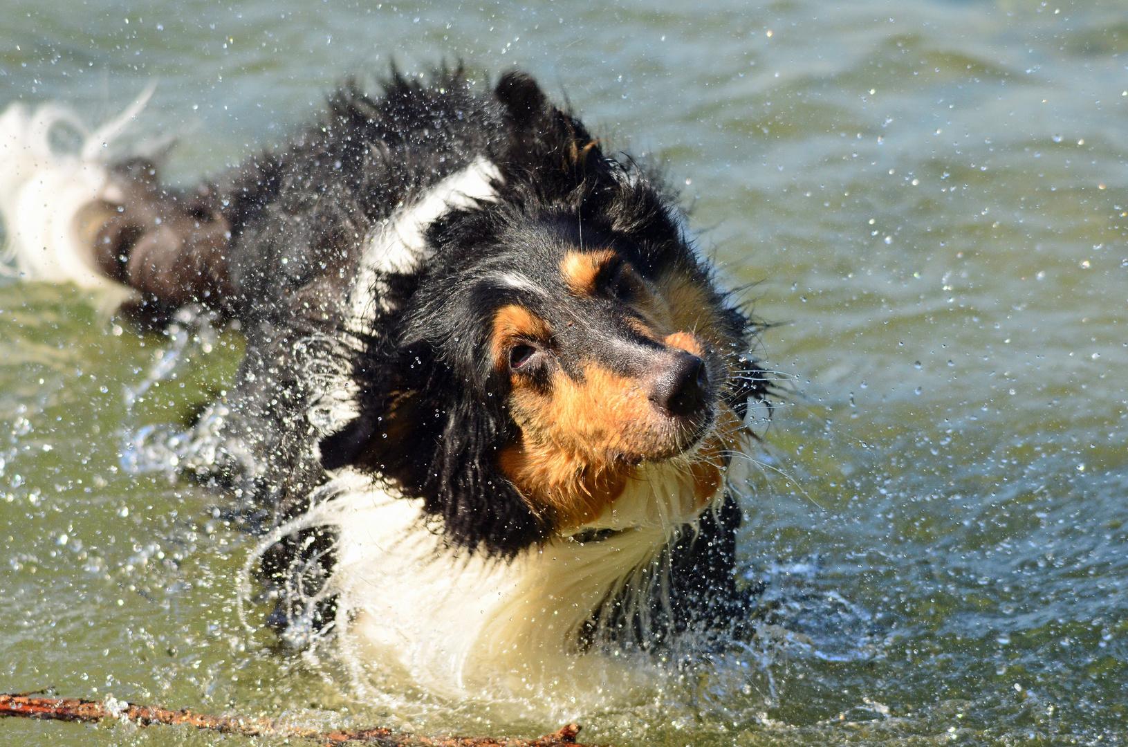 Hund schüttel dich.............