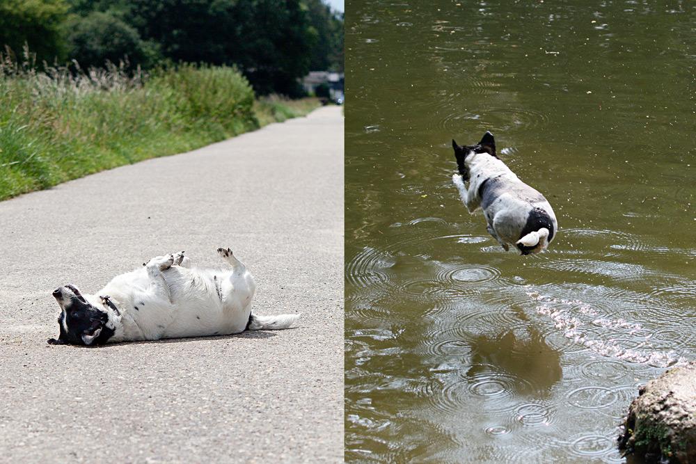 Hund soll spazieren = fällt tot um. Hund am Wasser = lebt!