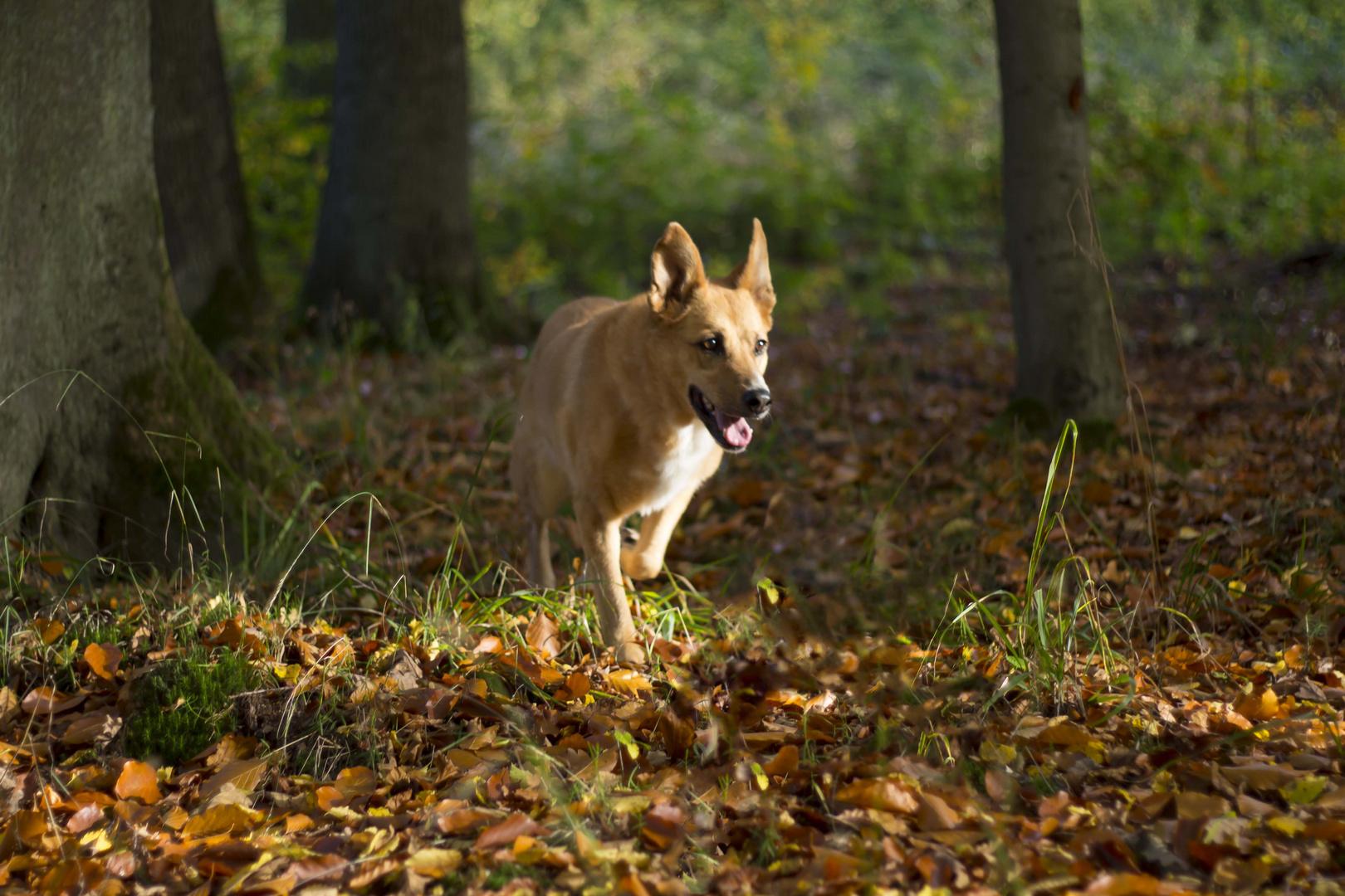 Hund streift durch den Wald