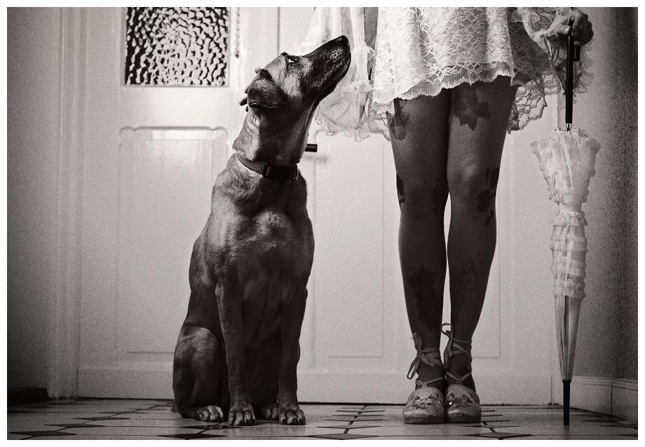 Hund und Dame
