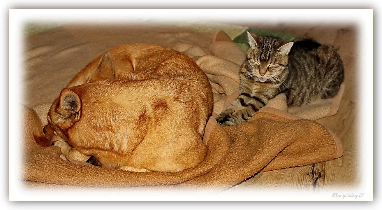 Hund und Katz beim Mittagsschlaf