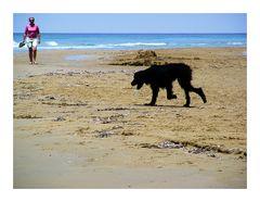 Hund und Meer