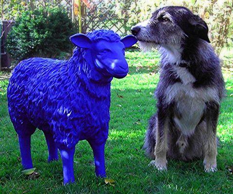 Hund und Schaf