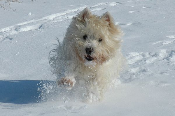 Hund und Schneegestöber