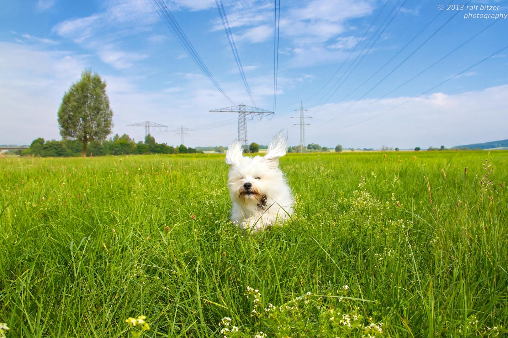 Hund unter Spannung