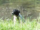 Hund .u.Wasser