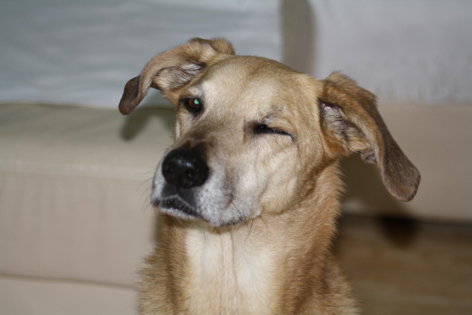 Hund zwinkert ; )