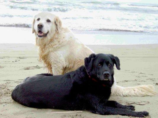 Hunde am Meer