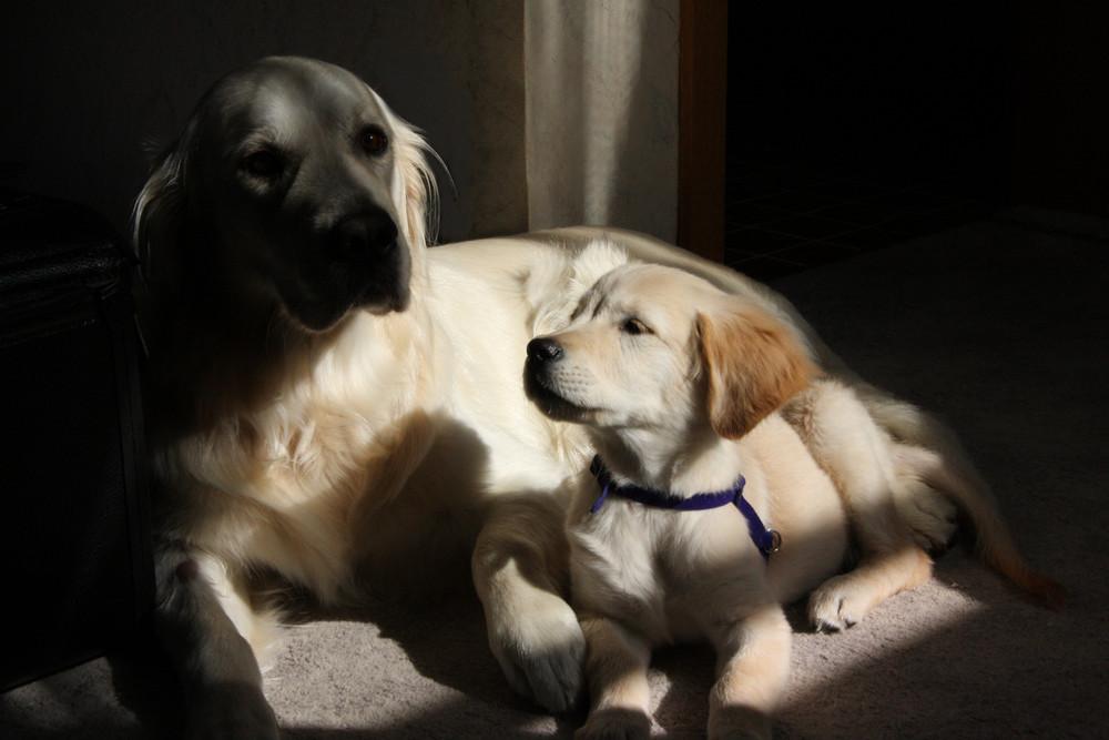 Hunde-Asyl