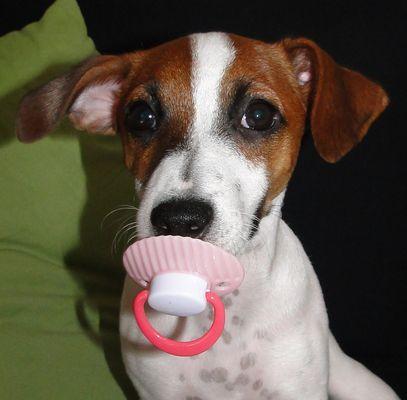 hunde baby