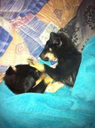 hunde baby´s schlafen