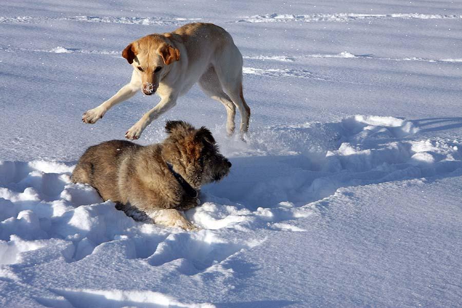 Hunde - Ballet